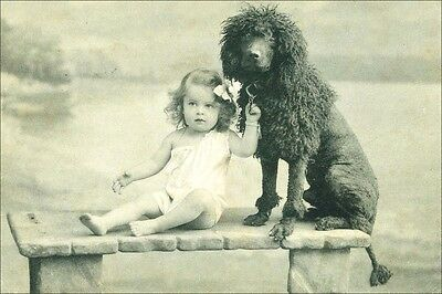 Poodle Dog & Cute Child Antique 1908 Photo  LARGE New Blank Note Cards
