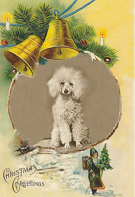 Poodle Dog 1933 Vintage Photo New Blank Christmas Note Cards