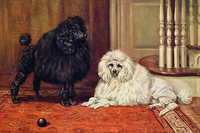 Poodle Dogs by by Edwin Megargee 1937 New Blank Note Cards