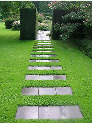 200Pcs Seeds Ground Herniaria Glabra Cover Green Carpet Grow Poor Soil Lawn Seed