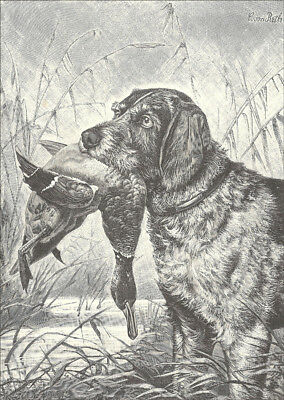 German Wirehaired Pointer Dog w/ Duck 1899 - LARGE New Blank Note Cards