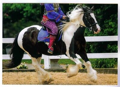 """billy O'brian"" Gypsy Vanner Horse Kentucky Horse Park Postcard"