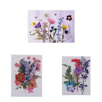 Multiple Real Pressed Flower Embellishment Scrapbooking For Phone Case Craft
