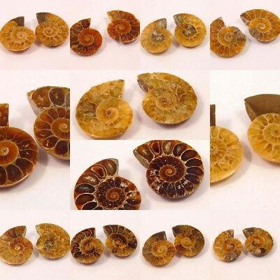 100% Natural Pair Of Ammonite Shell Gemstone G18281-18326 Free Shipping