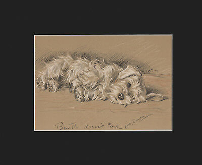 Sealyham Terrier Puppy Dog Setting  Print 1937 by Lucy Dawson 8 X 10 - NAPPING