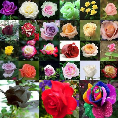 Flower 200pcs Plants Mixed Seeds Rare Style Multi-Colors Rose Decor