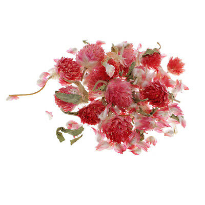4g/Pack Real Flower Dried Flowers Globe Amaranth for DIY Phone Case Decor