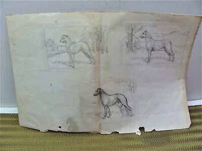 💕 Vintage Dog Pencil Sketches Drawing by Shary  Akers 💕 Afghan Hound Dog