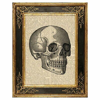 Dreamery Studio, Human Skull #1 Medical Illustration Art Print on Upcycled Book