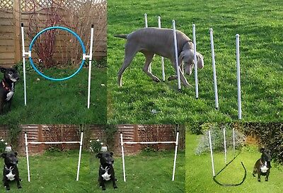 Dog agility Basic Starter set in White by jessejump agility