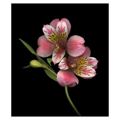 "Diamond Painting - Diamant Malerei - Stickerei - ""Blume"" (499/1)"