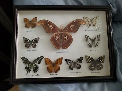 Awesome Butterfly Display Framed