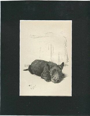 Scottish Terrier Puppy Dog  Print 1932  by Cecil Aldin 8x10 Black  Mat RELAXING!