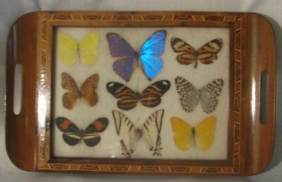 Vtg Carlos Zipperer Sobr. Butterfly Wing Art Inlaid Wood/Glass Tray 13 X 8-Nice