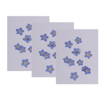 30x Forget-me-not Dried Flowers Embellishment for DIY Phone Case Decoration