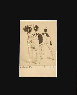 """vINTAGE Fox Terrier Dog Print 1936 by Diana Thorne 8 X 10 Matted - """"A Live Wire"""""""