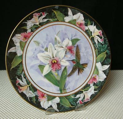 WHITE-BELLIED WOODSTARS HUMMINGBIRD by Politowicz COLLECTOR PLATE Royal Doulton