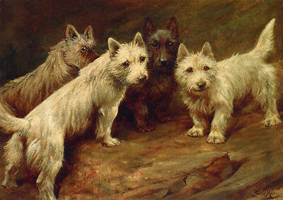 Cairn Terrier Puppy Dogs 1861 by Fanny Moody ~ LARGE New Blank Note Cards