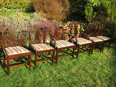 George III Style Mahogany Dining Chairs inc 1 Carver - Drop-In Seats - Set of 5