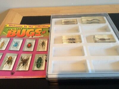 Real Life Bugs And Insects Magazines, Display Case