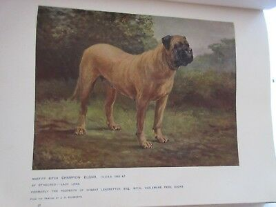 1911 The New Book of The Dog Vol I & II Robert Leighton Color Prints of  Dogs