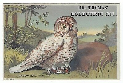 Dr. Thomas Eclectric Oil late 1800's medicine trade card- Snowy Owl- Otsego, OH