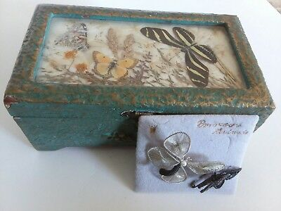 Vintage real mounted butterflies old primitive box with 2 thread wrapped pins