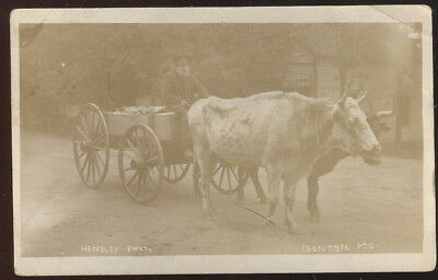 1911 Rppc, Ironton, Mo. Delivery Cart Pulled By 2 Cows, Codding's Meat Market