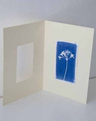 CYANOTYPE PRINT  10x18cm ON 20x30 cm HIGH WEIGHT CREAM COLOR PAPER
