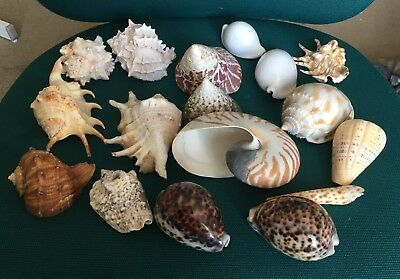 Variety Of Seashells, Collectable, Ornament Different Size And Shapes