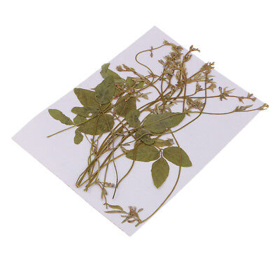 12Pcs Pressed/Dried Leaves Flower Pea Tendrils for Card Art Craft Scrapbooks
