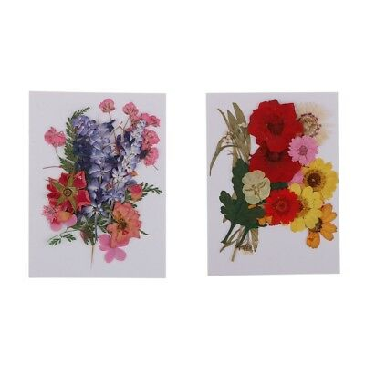 Multiple Pressed Real Dried Flower Leaves for Phone Case Card Decoration DIY