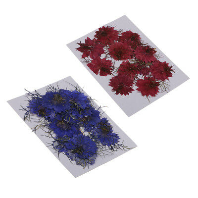 24pcs Red Blue Real Dried Flowers Love-in-a-mist Scrapbooking Embellishments