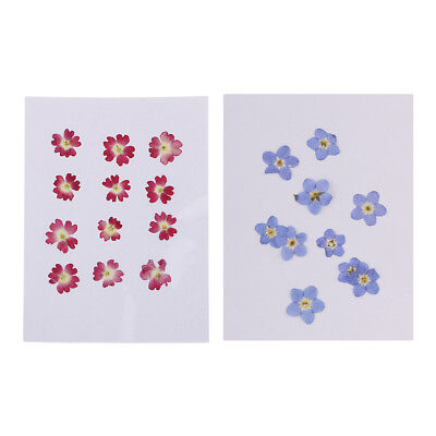 22x Pressed Real Dried Flowers Forget-me-not Verbena for Nail Art Decoration