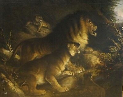 Fine Huge 18th Century British School Lions Den Study Antique Oil Painting Lion