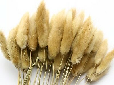 Mini Natural Dry Rabbit Tail Grass Natural Color 50Pcs A Bunch Dried Home Party