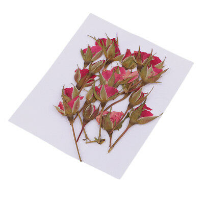 20pcs Pressed Flower Real Dried Rose Flower for Jewelry Making DIY Craft Red