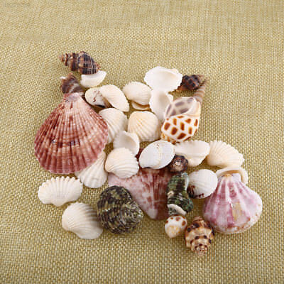 3163 New 100g Beach Mixed SeaShells Mix Sea Craft SeaShells Aquarium Decor