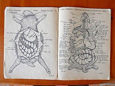1939 Biological Drawings  Medical Dissection Illustrated Book By Maud Jepson