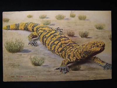 ARIZONA GILA MONSTER Poisonous Lizard Reptile Vintage Pre-Linen Animal Postcard