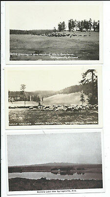 3 RPPC & Printed Postcards Beckers Lake Grazing Springerville AZ Arizona