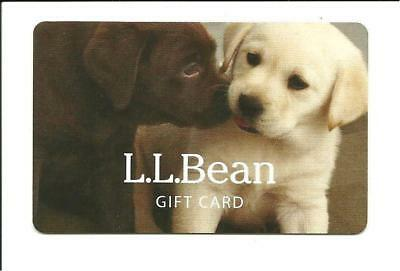 L L Bean Cute Puppies Gift Card No $ Value Collectible Dog Puppy