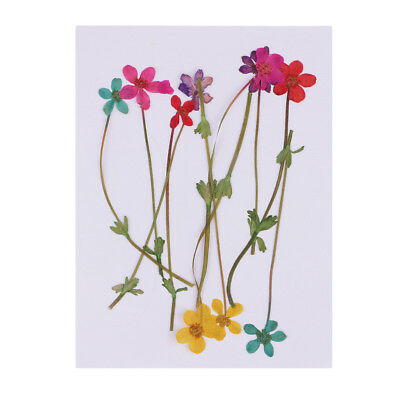 10pcs Real Pressed Dried Flower Dry Flower For DIY Resin Jewelry Craft Card