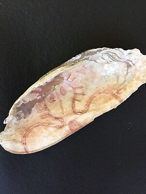 ETCHED WANDJINA UPON OUTBACK MUSSEL SHELL  : Aboriginal