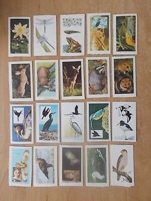 Job Lot Of 20 Summer County Countryside Cards - All Different - Van Den Berghs 3