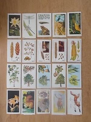 Job Lot Of 20 Summer County Countryside Cards - All Different - Van Den Berghs 4