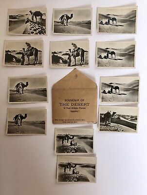 Vintage Authentic Souvenir Of The Desert Photographic Collection Real Photos, Nr