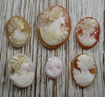 Cameo Lot of 6 Loose Shell Carved Vintage Antique 16.9 Grams