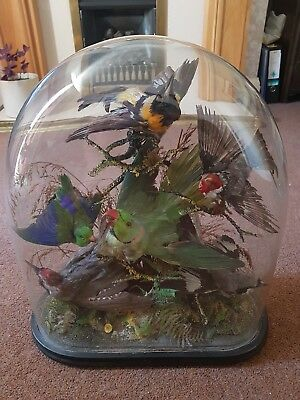 Large Antique victorian Glass dome with Birds interior design exotic tropical