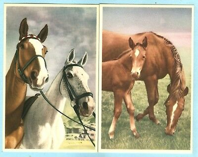 2nd 2 of 4 Alfred Mainzer (ALMA),2 Pair of Horses, Mother & Foal, Pair Head Shot